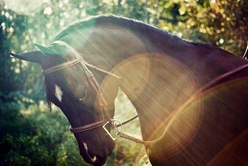 Самые крупные конные клубы Санкт-Петербурга