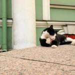 9 вещей, которые стоит сделать в Петербурге во время белых ночей.